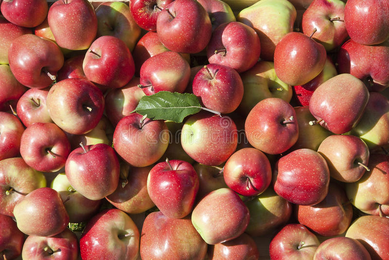 苹果背景红色 免版税库存图片