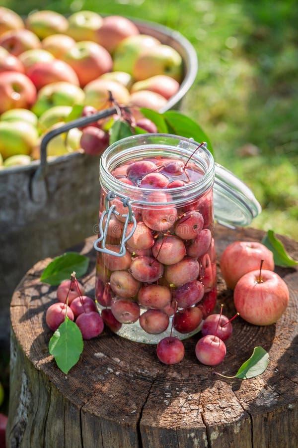 苹果蜜饯的准备在瓶子在夏天 图库摄影