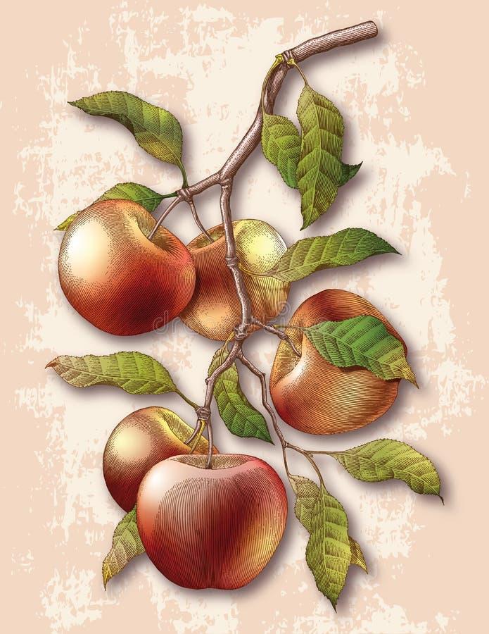 苹果计算机分支手图画葡萄酒板刻例证孤立 库存例证