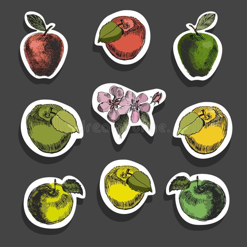 苹果计算机剪影贴纸 不同的苹果苹果和花葡萄酒墨水手拉的传染媒介,隔绝在白色 库存例证