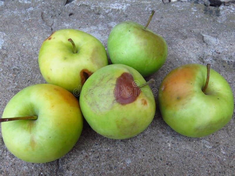 苹果计算机腐烂和其他果子腐烂真菌 腐烂的苹果 库存照片