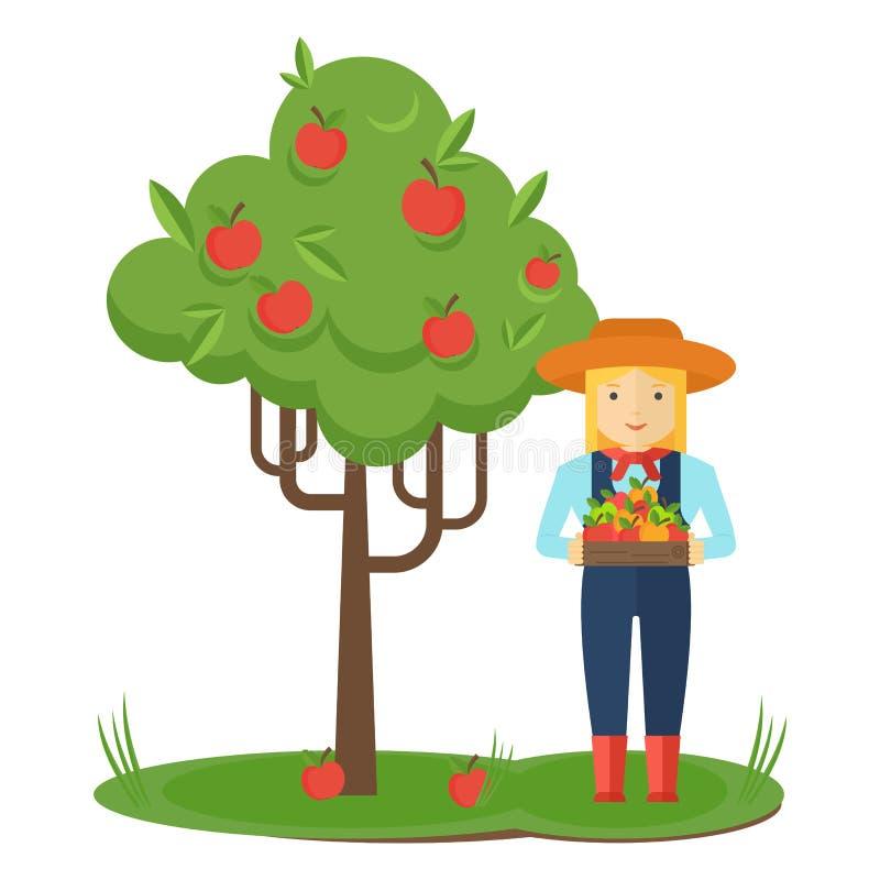 苹果计算机采摘 农夫妇女在有箱子的庭院里苹果在他的手上 库存例证