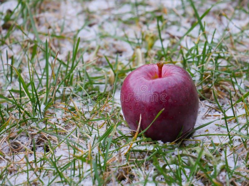 苹果计算机雪 免版税库存照片