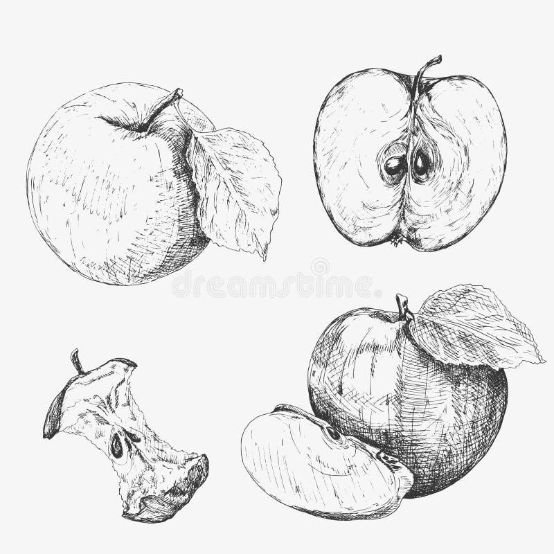 苹果计算机 高度详细手拉的苹果的收集 套手拉的苹果 免版税库存图片