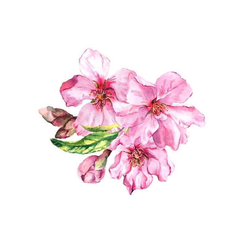 苹果,樱桃与芽,叶子的桃红色花水彩花束  杜娟花开花浅关闭dof的花出现 水彩植物的例证 皇族释放例证