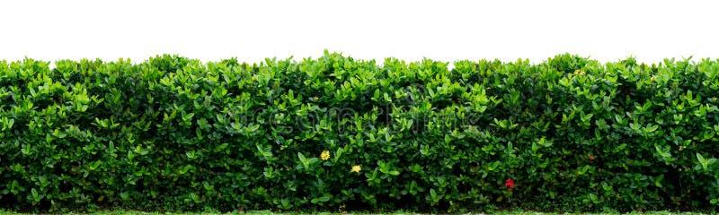 范围灌木 免版税图库摄影