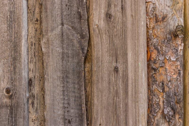范围老木 免版税库存图片