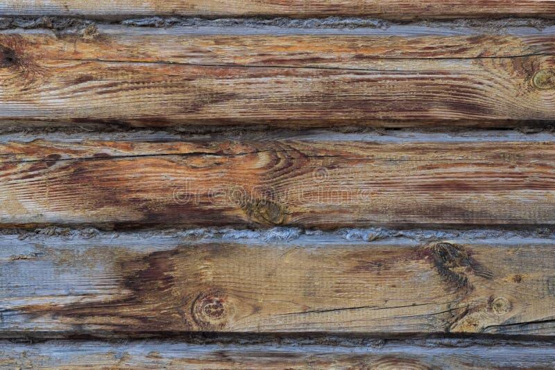范围老木 库存照片
