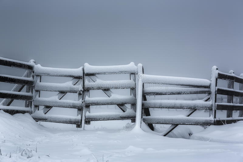 范围冻结的木 免版税图库摄影