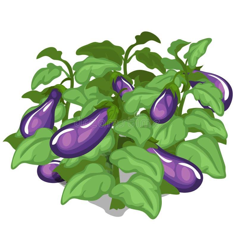 茄子的种植和耕种 向量 皇族释放例证
