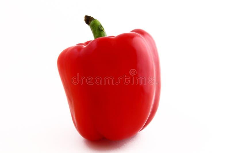 茄属植物植物胡椒 免版税库存照片