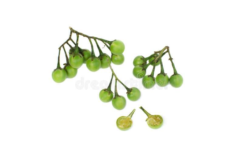 茄属torvum或火鸡多刺的孤立在白色背景 免版税库存照片