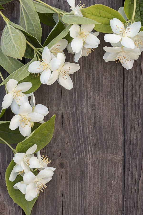 茉莉花花在木背景的 免版税库存图片