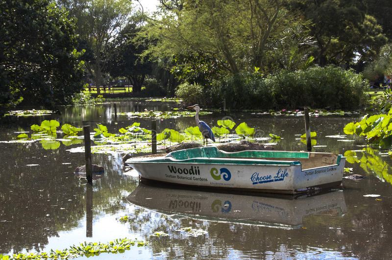 茎鸟和小船在池塘在Batanical庭院里 库存照片