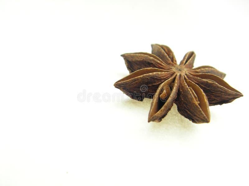 茴香唯一星形 免版税库存照片