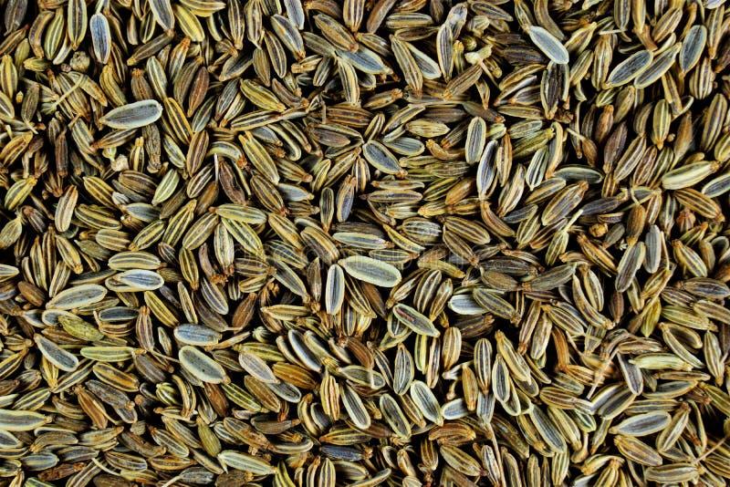 茴香籽-菜莳萝,香料 茴香-香料,绿色棕色颜色椭圆形种子,有甜芳香和甜辣 库存图片