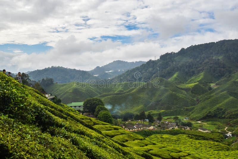 茶厂金马仑高原,马来西亚 免版税库存图片