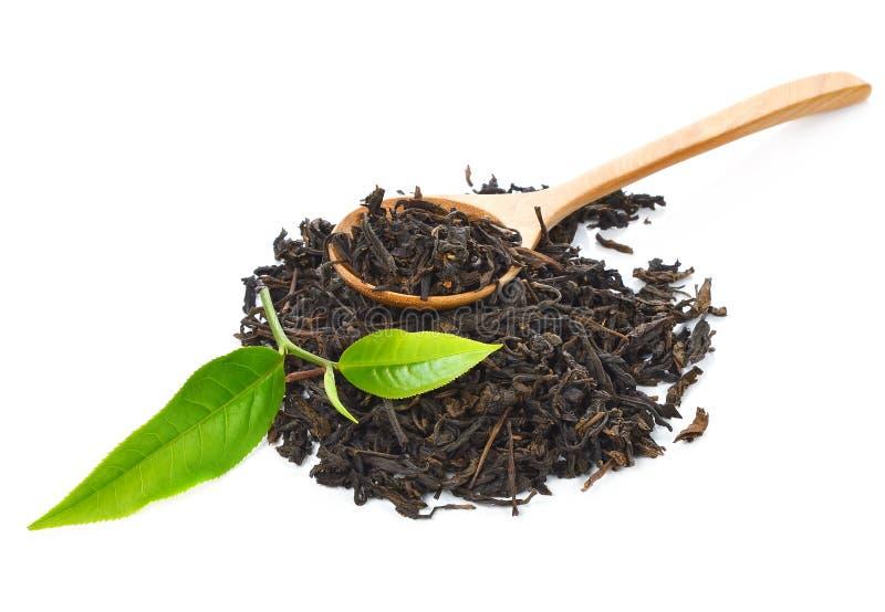 茶叶和干茶 图库摄影