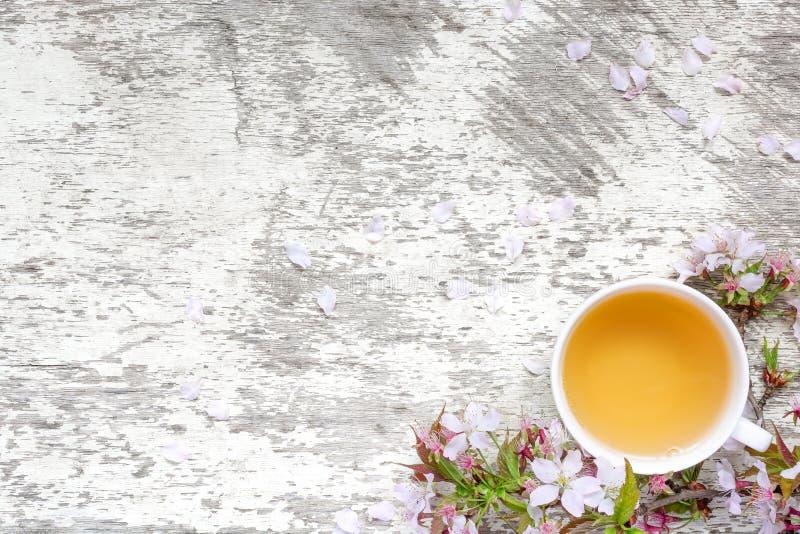 茶和春天樱花或佐仓在与瓣的白色土气木桌上开花 图库摄影