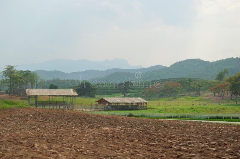 茶园风景,清莱,泰国 免版税图库摄影