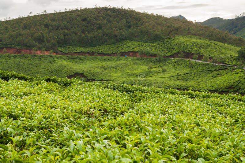 Download 茶园munnar印度 库存照片. 图片 包括有 著名, 庄稼, 横向, 小山, 高地, 农场, 耕种, 印度 - 59101056