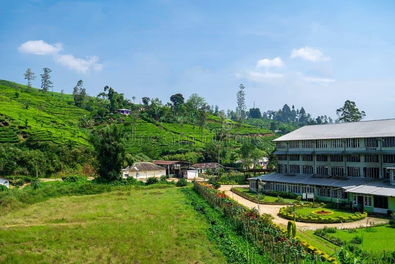 茶工厂和茶园斯里兰卡 库存照片