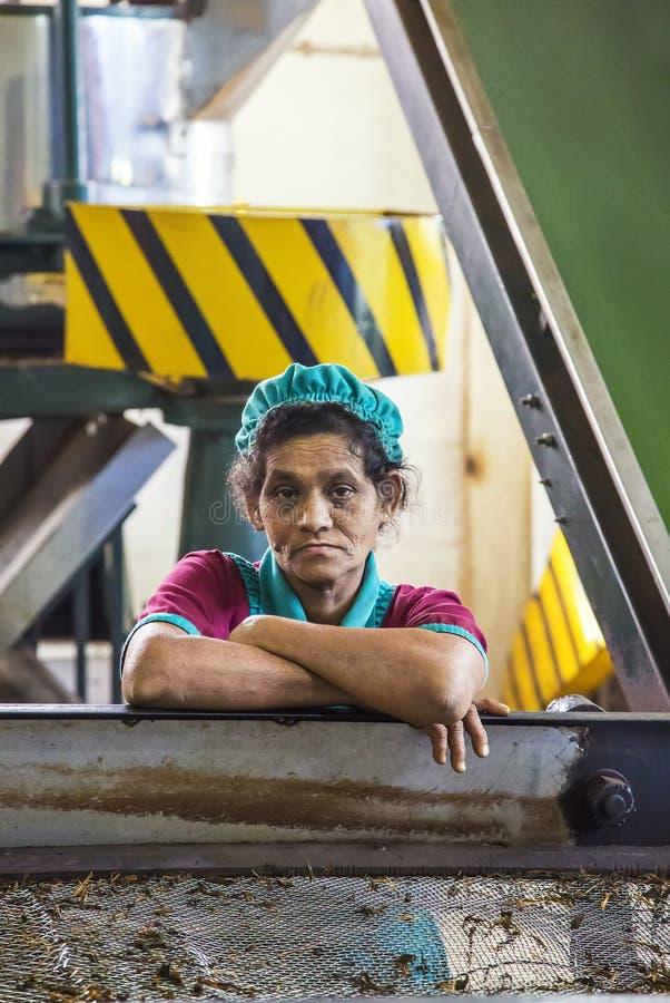 茶工厂在斯里兰卡 库存图片
