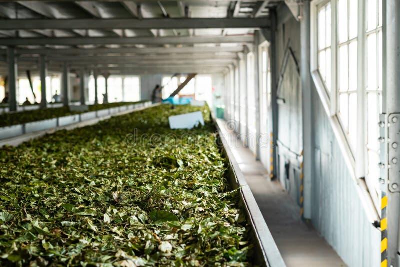 茶工厂斯里兰卡烘干了茶叶 库存照片