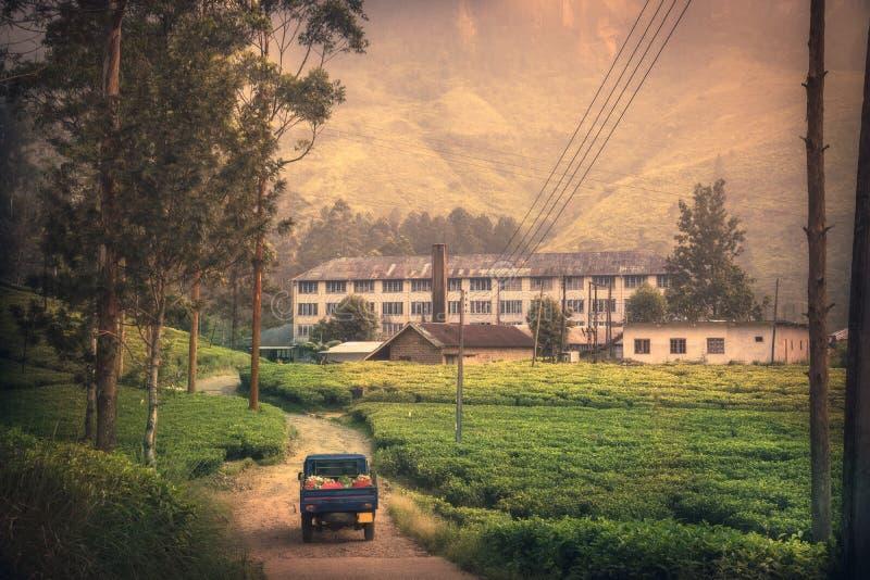 茶工厂种植园的移动的亚洲斯里兰卡在斯里兰卡努沃勒埃利耶调遣日出风景 库存图片