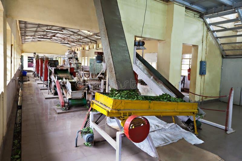 茶工厂,印度 免版税图库摄影