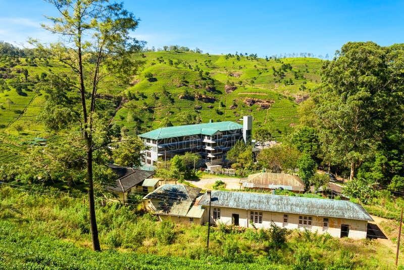 茶工厂,斯里兰卡 免版税库存图片