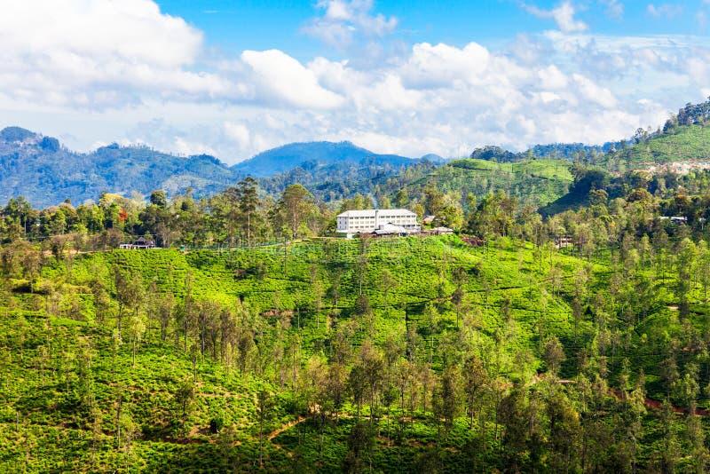 茶工厂,斯里兰卡 免版税库存照片