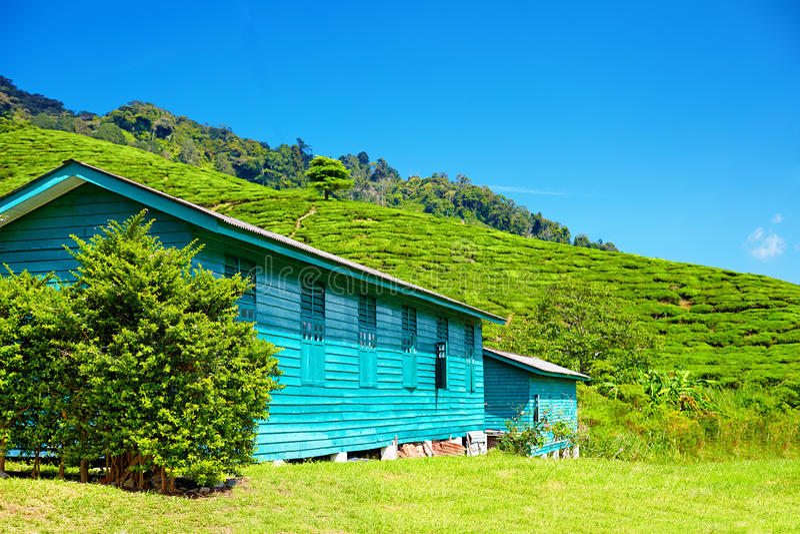 茶收藏家地方村庄在金马仑高原 免版税库存照片