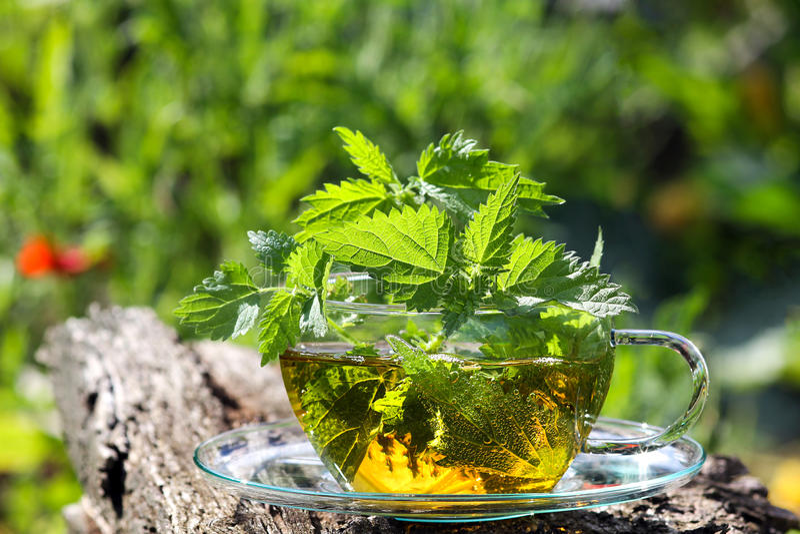 茶杯用新鲜的刺人的荨麻茶 免版税库存照片