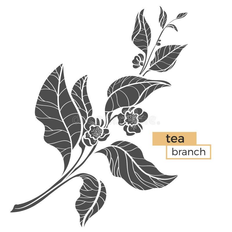 茶灌木分支与叶子和花的 可实现 传染媒介黑剪影 皇族释放例证