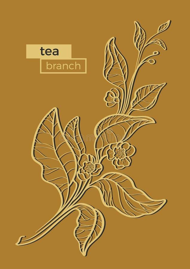 茶灌木分支与叶子和花的 植物的例证 可实现 有机产品 向量 皇族释放例证