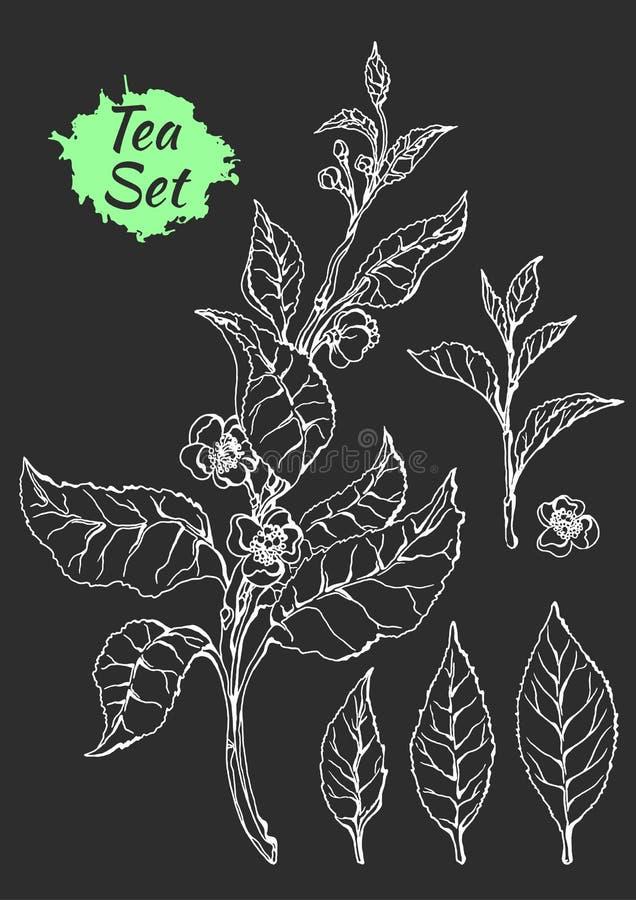 茶灌木分支与叶子和花的 植物的图画 剪影,集合 可实现 向量 库存例证