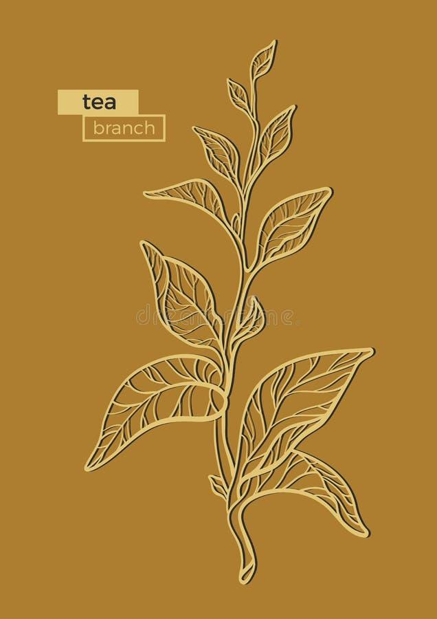 茶灌木分支  向量 可实现轻快优雅的例证 向量例证