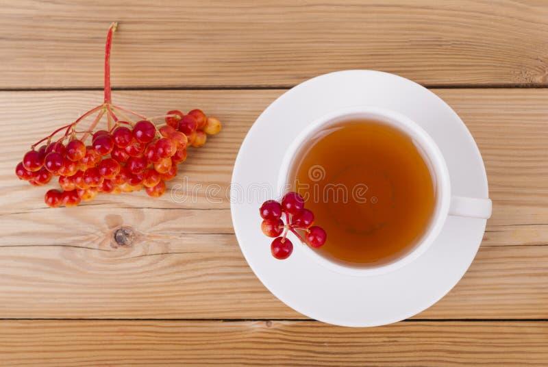 茶用红色荚莲属的植物莓果 免版税图库摄影