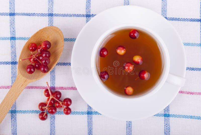 茶用红色荚莲属的植物莓果 图库摄影