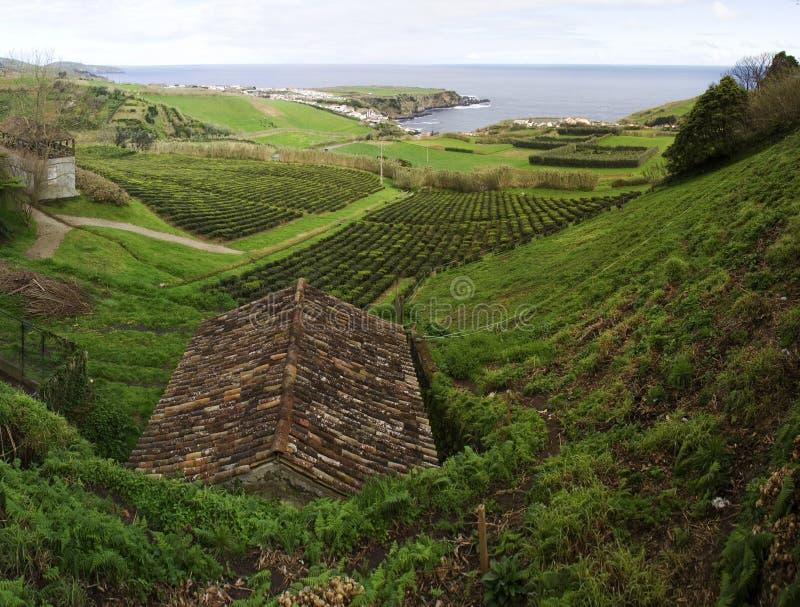 茶领域和小屋,亚速尔群岛 库存图片