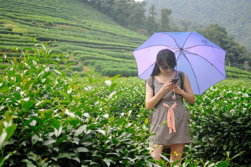 茶领域的亚裔妇女 免版税图库摄影