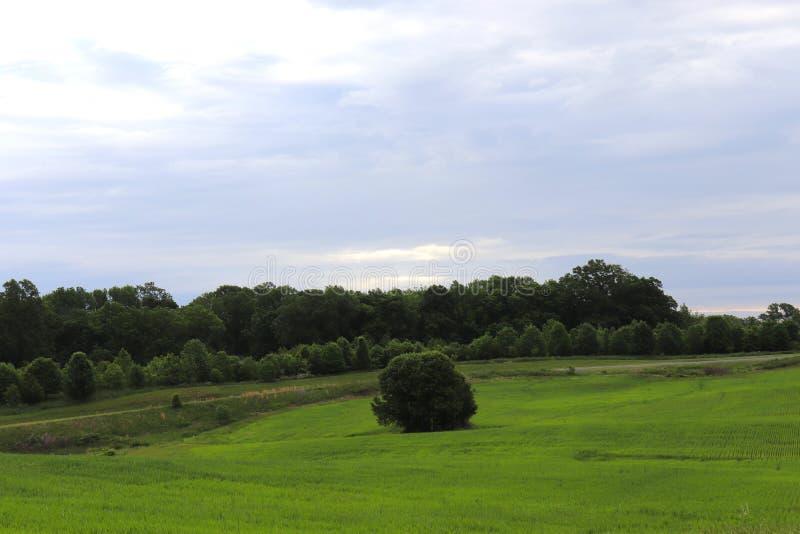 草、绵延山、Treeline和宽天空在农村创造华美的景色 库存图片