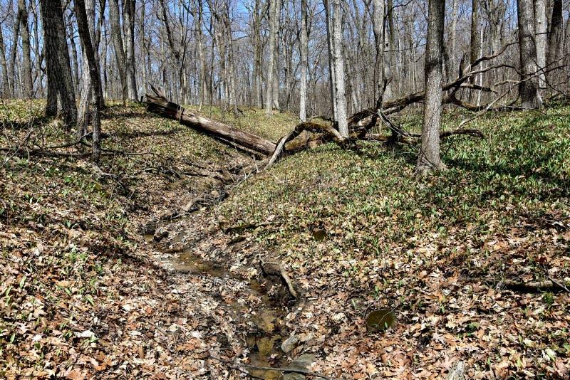草丛和小小河在森林 免版税库存图片