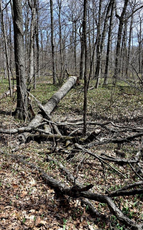 草丛在一个树木丛生的区域 免版税库存照片