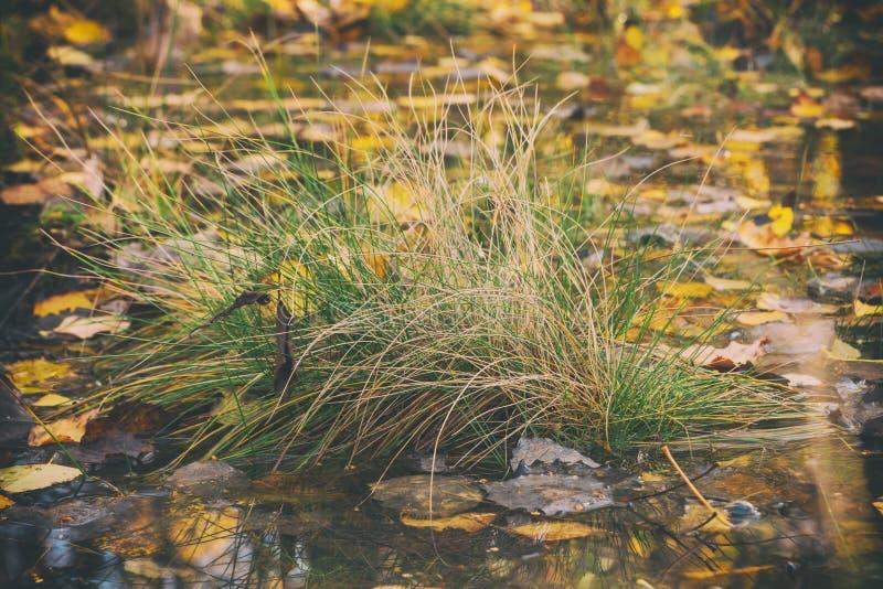草丛在水中 免版税库存照片