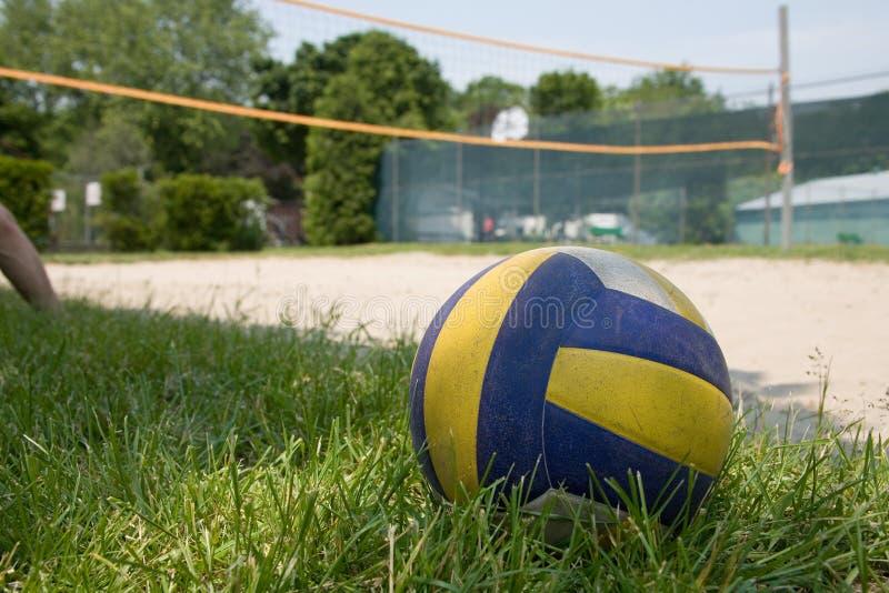 草体育运动排球 库存图片