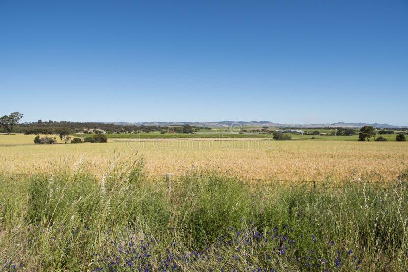 草原南澳大利亚,巴罗莎山谷 图库摄影