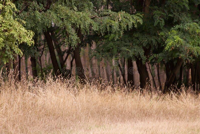 草原和森林 免版税库存图片