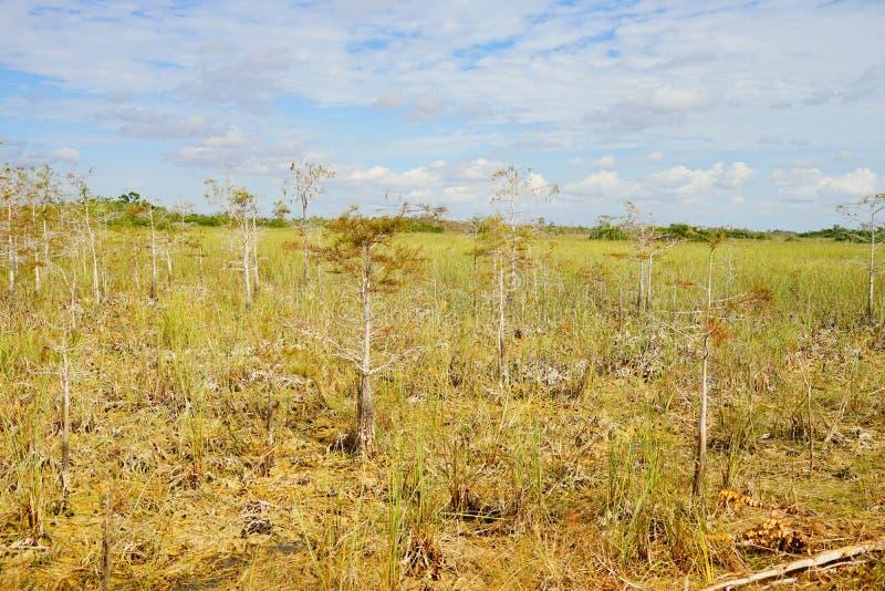草原在沼泽地国立公园 免版税图库摄影